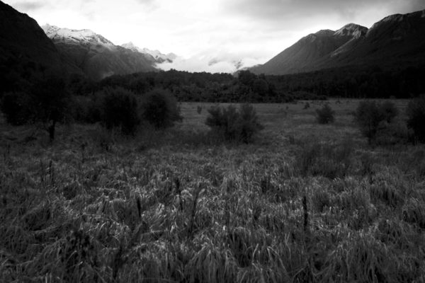NZ_004