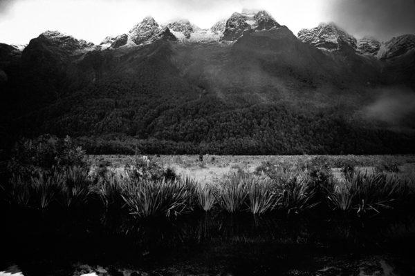 NZ_007
